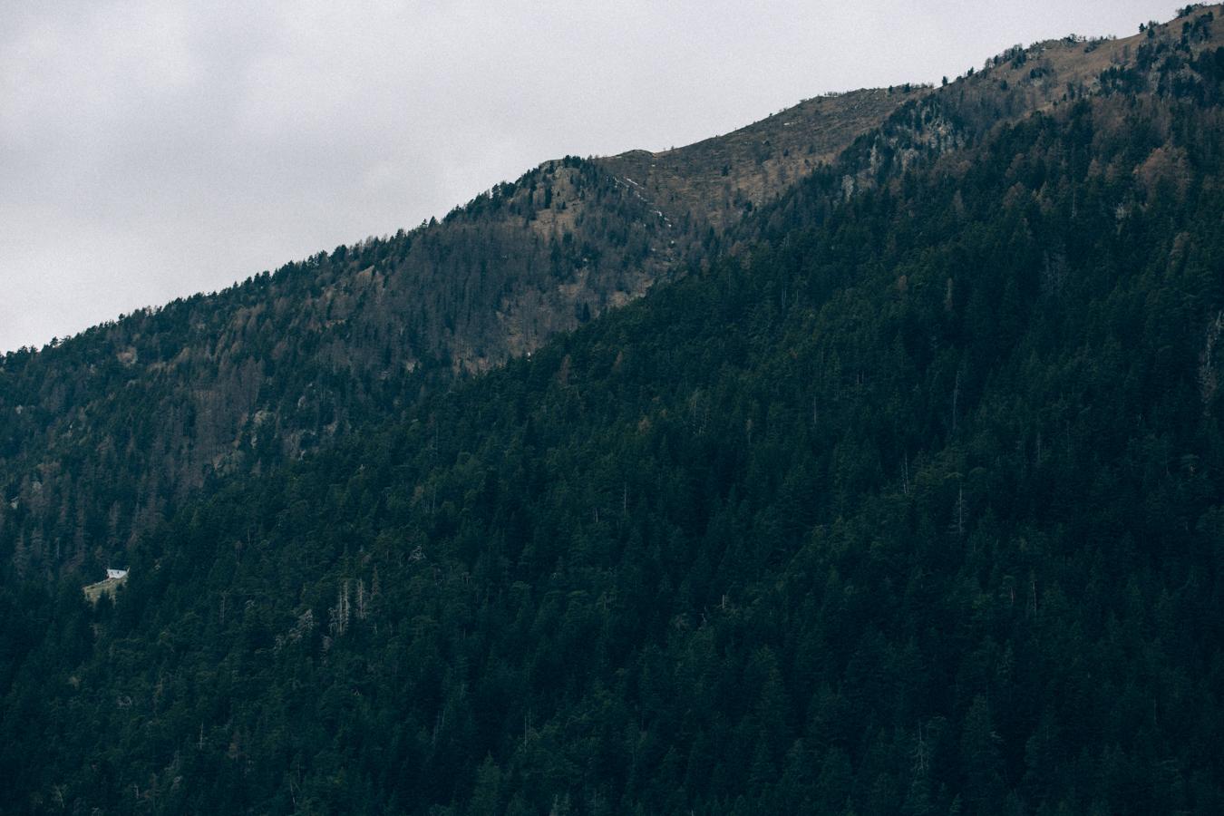 Une balade à deux en forêt, une-seance-engagement-en-foret-ingrid-lepan-photographe-1